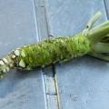 Racine-wasabi-prete-a-lemploi1
