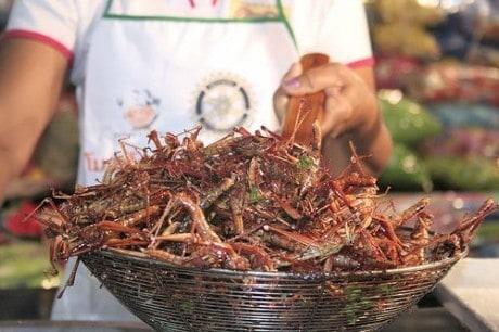 Tendência mundial: Comer insetos. Anima?