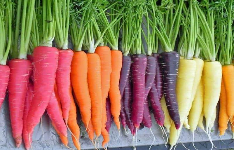 cenoura colorida
