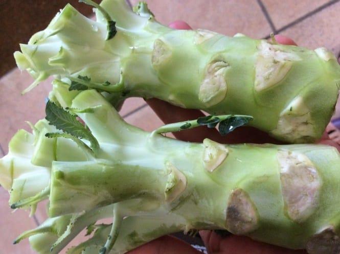 tudo sobre brócolis